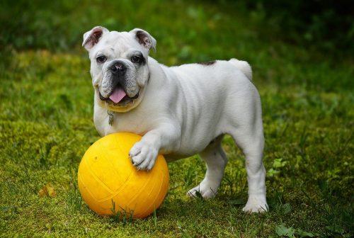 kutya-jatek-veszelyek