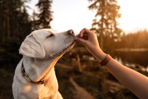 happy-and-fit-tévhit-kutyakaja