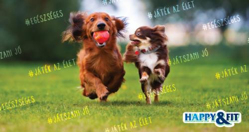 happyandfit-kutyataplalas-tevhitek-es-leleplezesuk