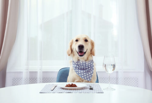 happyandfit-kutyataplalas-tevhitek-es-leleplezesuk2