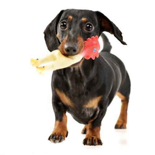 happyandfit-kutyataplalas-tevhitek-es-leleplezesuk3
